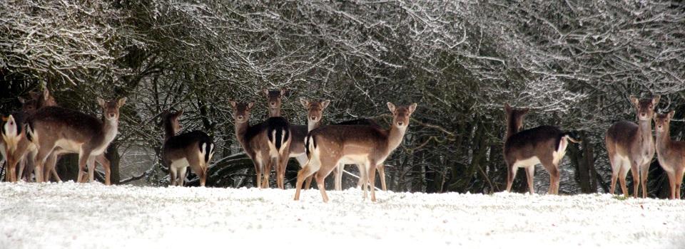 Deer-Sheila-Jones-960-350