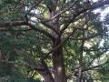Screwey Tree-800