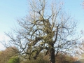 Tree pattern-800