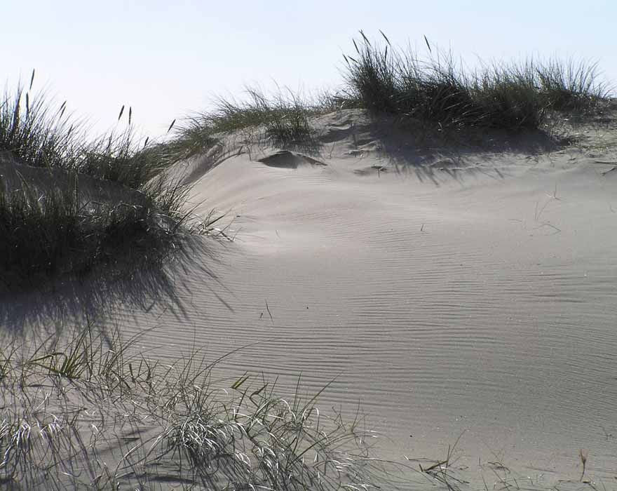PC-Walberswick Dunes-Time-Oct-2016-700